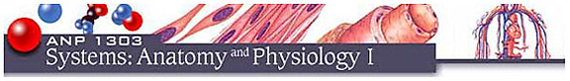 Image of the course banner (ANP1303 Systems: Anatomy and Physiology I)